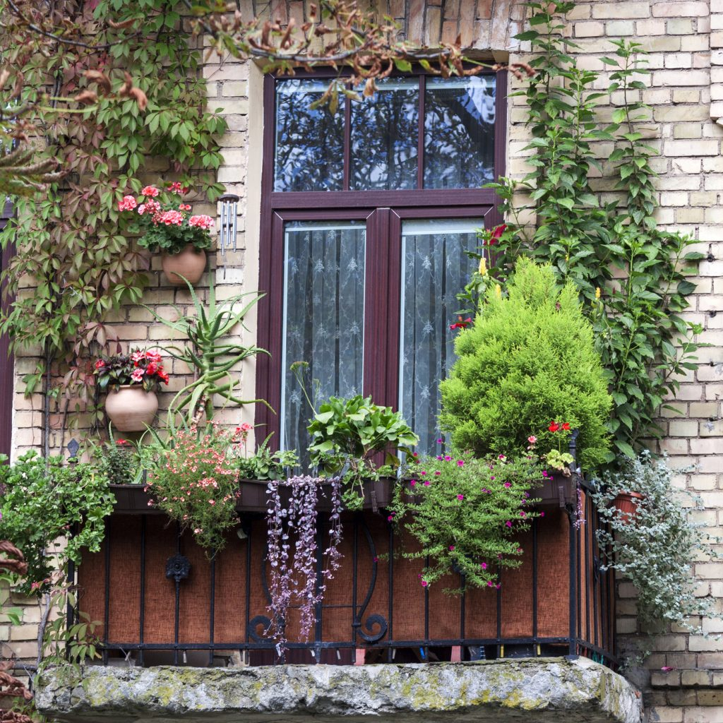 Old balcony overgrown with flowers and green plants at summer time